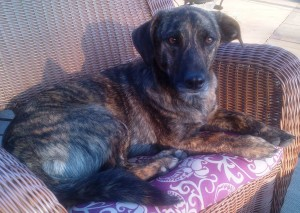 Reese's Dog, Bogey